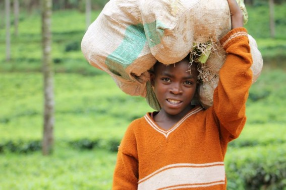 A girl carries cabbage on her head while trecking home.