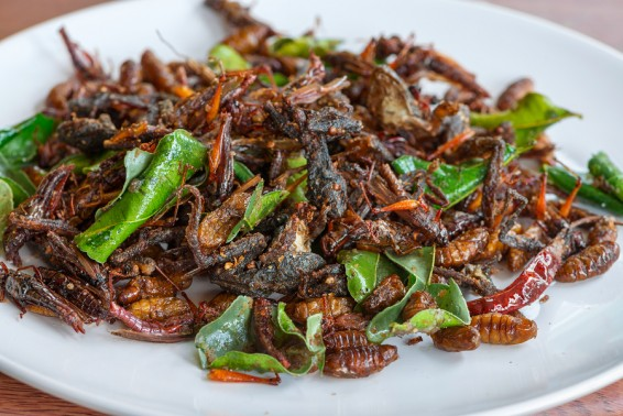 Fried edible insects mix on white plate with green lime leaves. Fried insects are regional delicacies food in Thailand