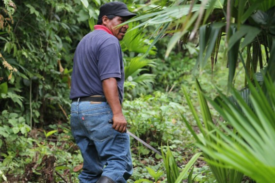 The leader of the Embera community leads us deep into the jungle... He clears a path through the dense brush with a machete.