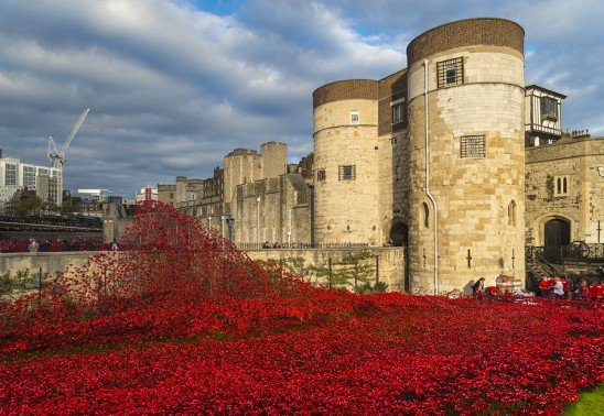 London, Uk - October 18, 2014: Tower of London and art installation - Blood Swept Lands and Seas of Red sees 888246 ceramic poppies planted in the Tower's moat each poppy representing a British military fatality during the war