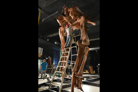 Installing the cast at the Museum